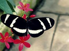 A Butterfly Effect