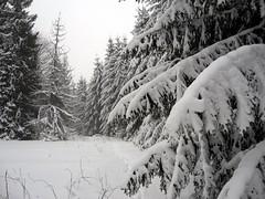 smerek_13 (wojciechbijok) Tags: snow bieszczady snieg smerek