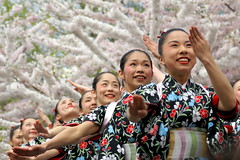 Japanese dancers, with cherry trees (moocatmoocat) Tags: park philadelphia festival mi cherry dancers blossom ev sakura fairmount drummers