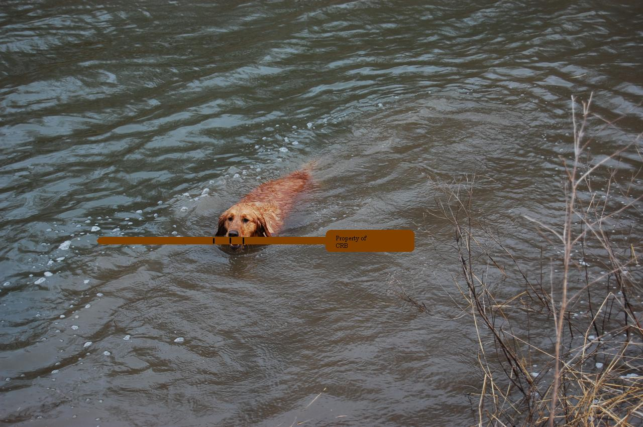 Nola paddle theft