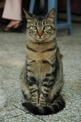 2008-0510-cat18