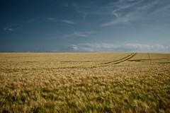 A Neverending Story (Pascal Hertleif) Tags: cloud field clouds landscape countryside corn felder wolke wolken fields landschaft getreide