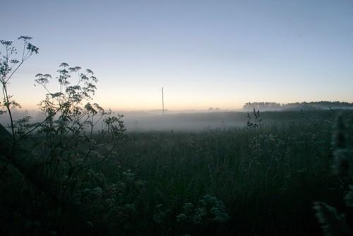 Morgennebel steigt aus einer Wiese im fahlen Sonnenlicht