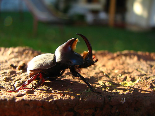 Run Baby Run. Beetle