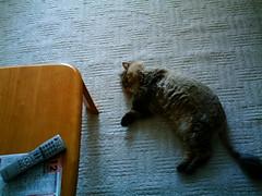 【写真】VQ3007で撮影した室内(ダレる猫)