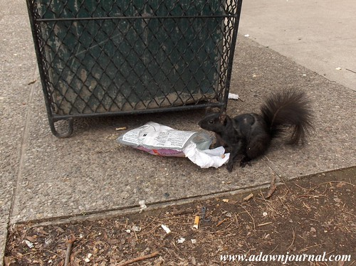 Look What This Canadian Black Squirrel Is Doing - Part 2 by adawnjournal