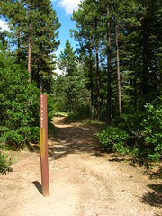 Trail to Pines