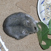 青梗菜を食べるコー太