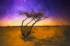 Desert Tale (Khaled A.K) Tags: tree texture dead photography desert sa canoneos350d saudiarabia photoart khaled jedda ksa saudia sigma1020 abigfave aplusphoto kashkari goldenvisions
