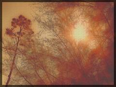 Trees (klausthebest) Tags: park italy sun colour tree texture italia liguria sunrays soe italians villaserra blueribbonwinner fineartphotos golddragon mywinners abigfave artlibre platinumphoto anawesomeshot holidaysvacanzeurlaub goldenphotographer santolcese theunforgettablepictures betterthangood theperfectphotographer comago multimegashot rubyphotographer magicdonkeysbest mallmixstaraward