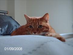 Ollie (topnotch1) Tags: kittyschoice catnipaddicts