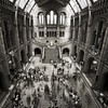 UK - London - Natural History Museum lobby sepia