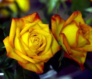Blumen fürs Wochenende / Flowers for the weekend