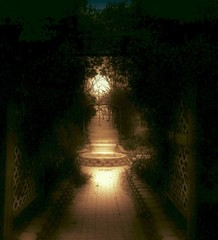 Path To The Fountain Of Youth (deepintheforestcat) Tags: mood haunted atmospheric fountainofyouth darkpath vinecovered