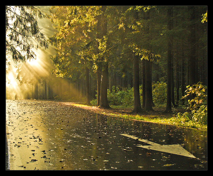 sunrays_1
