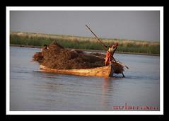 panjnad (TARIQ HAMEED SULEMANI) Tags: pakistan boat sensational punjab 1001nights reflexions tariq sceneries framedpictures blueribbonwinner digitalcameraclub framedphotos supershot flickrsbest panjnad anawesomeshot isawyoufirst riversofpakistan concordians excapture sulemani goldstaraward punjnad llovemypics flickrlovers satlujriver panoramafotogrfico