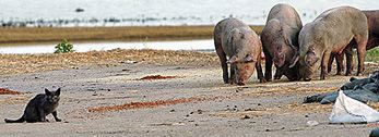 Kinship Circle - 2008-10-14 - Piglets Of The Flood 03