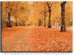 Otoño Hermoso (Muzammil (Moz)) Tags: fab beautiful manchester october moz beautifulautumn 金秋 khoobsooratkhzaanurdu pattjarhurdu otoñohermoso automnebeau schönerherbst belooutono shashtakhzaan sohnipattjarrh vackerhöst