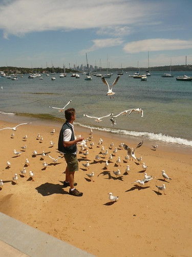 blog voyage australie sydney whv backpacker travel watson bay mouette plage