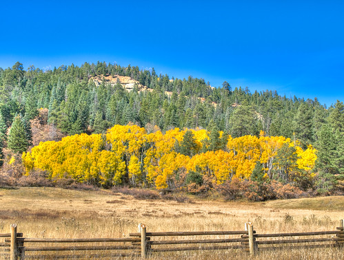 Colorado Aspens in HDR from Photomatix