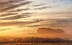 Dickie Wood (Dan Baillie) Tags: sun mist misty fog sunrise d50 landscape scotland nikon portfolio dumfriesandgalloway puddock danbaillie flickrlovers natureandnothingelse bailliephotographycouk bailliephotography wigtownshirephotographer dumfriesandgallowayphotography
