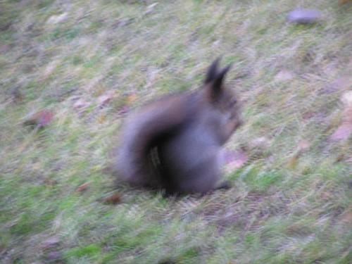 Sumealle oravalle maistuu sumea pähkinä sumealla nurmella