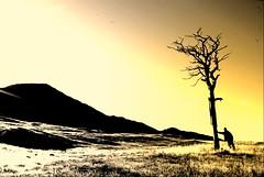 One step too far ! (Nicolas Valentin) Tags: cold tree dead scotland scenery hillwalking flickrsbest nicolasvalentin