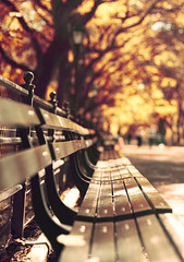 CP (Lee_Bryan) Tags: autumn newyork fall bench dof bokeh centralpark