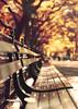 CP (Lee_Bryan) Tags: autumn newyork fall bench dof bokeh centralpark