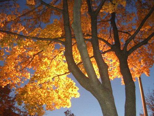 Natural and Un-Natural Lights of Autumn Dusk 2