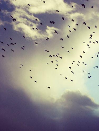 Ännu ännu mer fåglar
