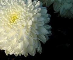 Un nuovo giorno, un nuovo mondo (White Red Flower) Tags: soe dawnofanewday damniwishidtakenthat lalbadiunnuovogiorno