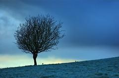 Shades of Blue (Dan Baillie) Tags: winter cold tree scotland nikon frost portfolio dumfriesandgalloway puddock wigtownshire danbaillie kirkcowan bailliephotographycouk bailliephotography wigtownshirephotographer dumfriesandgallowayphotography