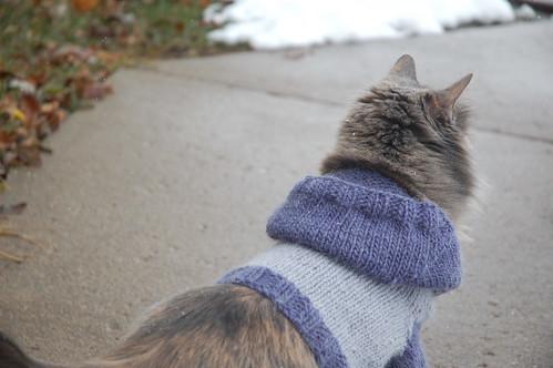 Cat Hoodie - Making Me Purrrrrr....