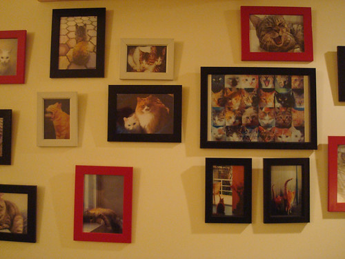 Cat photos at Miao Cafe
