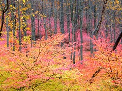 Pink Forest (Stanley Zimny (Thank You for 16 Million views)) Tags: park pink autumn trees fall yellow seasons nj ringwood