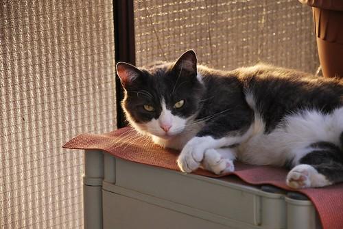 Il re del balcone
