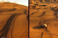 !  :D (@mi'sphoto) Tags: animal persian tank iran persia amir        canons3is         p