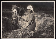 Smiles At Harvest Time (A.Davey) Tags: japan threshing riceharvest oldjapan vintagephotosofjapan threshingrice vintagejapanesericeharvest japanesericeharvest farmwomen