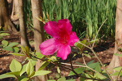 Pink Flower Aperture Study