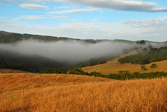 Carmel Valley ([Captured by Light]) Tags: california morning field grass fog landscape valley carmel hastings northern
