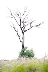 Cold Tree (SlabbertJ) Tags: world africa wood trees sky blackandwhite woman plants white black cold flower color tree green window nature coffee beautiful field grass leaves rain silhouette clouds contrast naked southafrica outside outdoors shower photography droplets hannes high nikon colorful moments solitude alone wind serious time branches south conservation overcast blowing highlights adventure deadtree single worn fields johannes overexposure metaphor heavens raining desolate monolith twigs deserted wilhelmus soccerworldcup slabbert worldcup2010 momentsphotography jwslabbert hannesslabbert johannesslabbert wilhelmusslabbert johanneswilhelmusslabbert