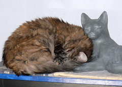 Total Snug (Glenn Harris (Clintriter)) Tags: sleeping sculpture pets cute cat tortoiseshell tortie snug maxine inspiredbylove cc200 cc100 kissablekat bestofcats pet100 goldstaraward catnipaddicts boc0708