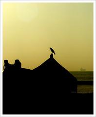 ($udhakar) Tags: morning black bird beach water silhouette yellow boat morninglight waiting ship pentax crow bayofbengal yellowlight kakinada vakalapudi justpentax wwwsudhakarcom petnaxk100dsuper bestbirdyshotigotsofar