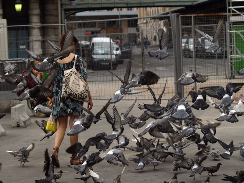 faut pas nourrir les pigeons !!! 2729425962_c975622b98_o