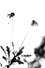 Decayed in the Summer (BW)