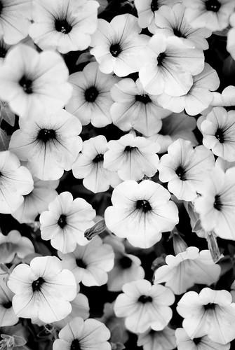 flowerbed-3