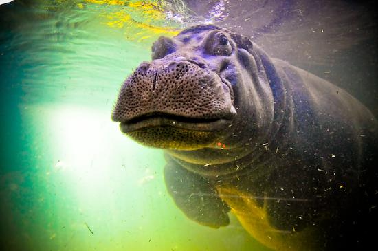 Adventure Aquarium Camden, NJ