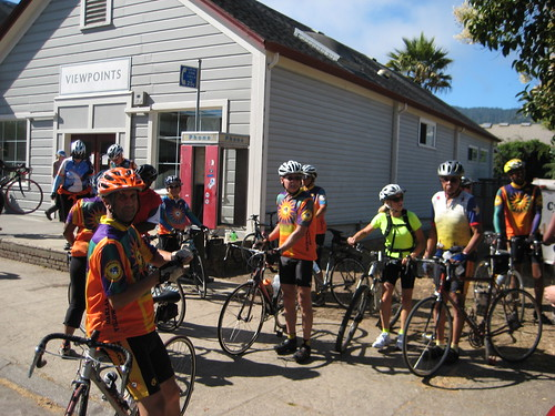 Yellowjackets in Pt. Reyes