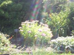 blurryrainbow